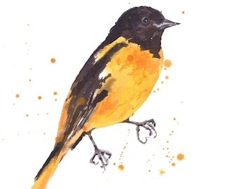 Watercolor BALTIMORE ORIOLE Print, yellow black, bird paintings, watercolor birds, Baltimore