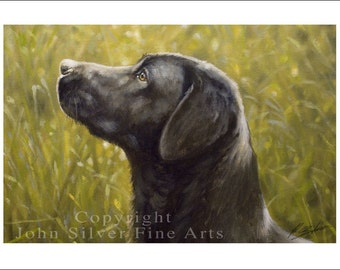 Black Labrador Dog Portrait by award winning artist JOHN SILVER. Personally signed A4 or A3 size Print. BL001SP