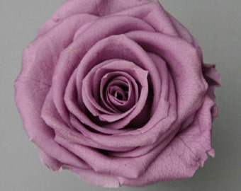 Purple Roses, Preserved *Natural Lovely Roses, Preserved Violet Roses,Rose Bouquet, Preserved Rose Bouquet  Simply Beautiful !