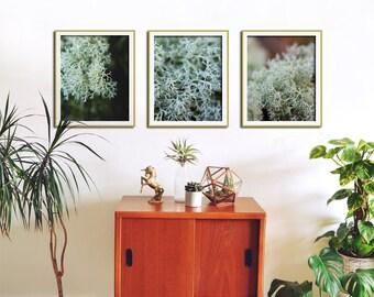 Set of 3 Wall Art Prints, Living Room Decor, Bedroom Decor, Kitchen Wall Art, Modern Rustic Home Decor, Bathroom Art, Botanical Print