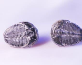 Superb Little Fossil Trilobite Stud Earrings