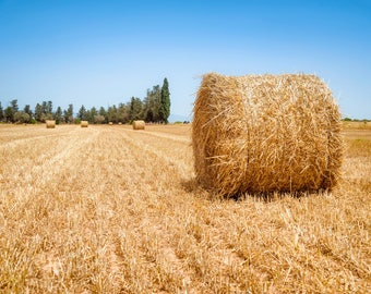 Digital Print, Wall Art, Artwork, Photography, Nature, Canvas, Print, Download, Hay Bales On A Summers Day