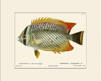 Vintage Fish Print #172, Art Print with Mat, Note Card, Natural History, Beach House Wall Art, Nautical Art, Sea Life Prints, Wall Decor