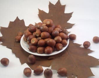 100 Real Acorns the harvest of 2017 , Natural Acorns, Rustic wedding Decor, Floral preform for crafts, Natural Home decor , Florist crafts