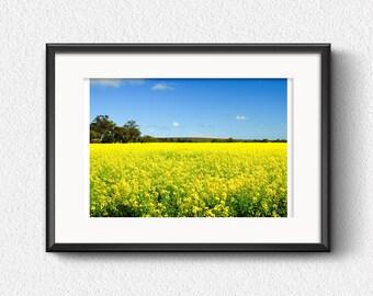 Photo Print, Yellow canola field - Canola fields, Western Australia