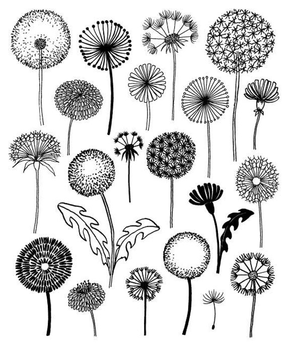 Dandelions limited edition giclee print for Zentangle per bambini