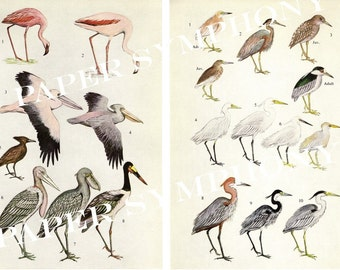 Instant Download Digital Collage Sheet Herons, Egrets, Flamingos, Pelicans, Storks and Hammerkops PSS 0594