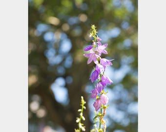 Bright Flower Decor, Sunny Day Flower, Nature Photography, Purple Blue Art, Purple Plantain Lily Photo, Purple Flower Photo, Purple Floral