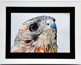 Watercolor Paintings of Red Tailed Hawk - Notecards