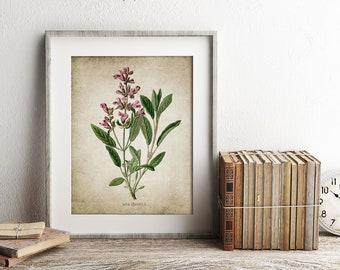 Sage Herb Print - Sage Herb Plant Illustration - Sage Herb Botanical - Digital Art - Printable Art - Single Print #153 - INSTANT DOWNLOAD