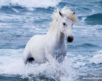 White Stallion in the Waves - Fine Art Horse Photograph - Horse - Ocean - Camargue - Fine Art Print