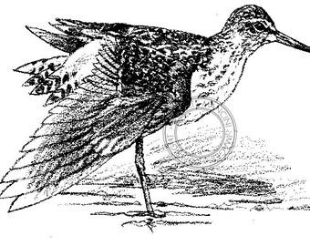 Wood Sandpiper pencil drawing - bird art, wildlife art - nature print of original artwork