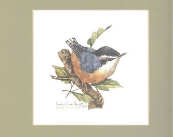 Nuthatch 9 x 9 lithograph