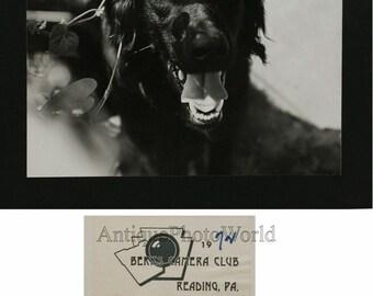 Smiling black dog vintage art photo