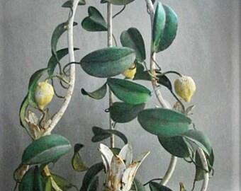 Tole Three Light Lemon Tree  Chandelier