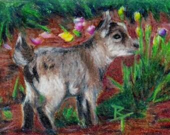 Baby Goat - Kid aceo Original Artwork