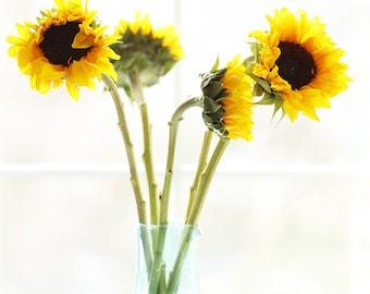 Sun drenched Sunflowers.  Flowers, Still life, Window light, Flower printables, Sunflower digital download, Large wall art, Instant Art