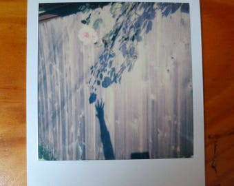 Original Polaroid Art Photo - Reaching For The Shadow Of A Rose - OOAK