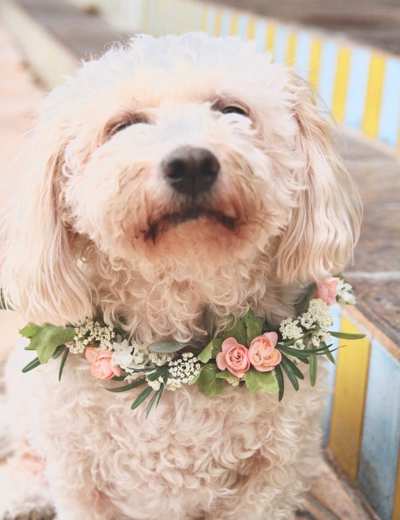Dog Flower Collar | Dog Wedding Flower Collar | Dog flower wreath | Dog wedding collar | Wedding decor | Dog of Honor | Dog wedding Leash