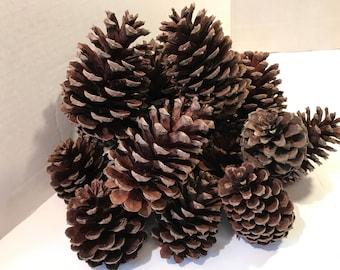 Pine Cones Mixed Sizes Fall Craft Centerpiece Basket Filler