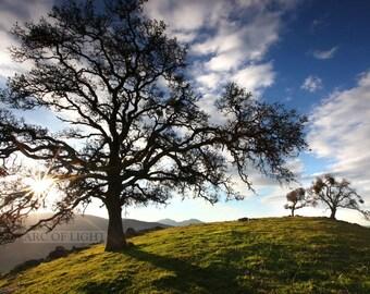 Mt. Diablo, California, landscape photography. Oak tree photograph, hiking, sunset, Bay Area, Sunset, orange yellow, clouds fine art photo