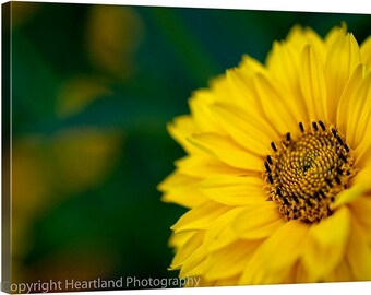 Yellow Daisy Canvas, Yellow and Green, Macro Photography, Nature Canvas Print, Detailed Flower, Yellow Flower Art, Canvas Wall Art