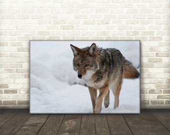 Coyote Canvas Print Art
