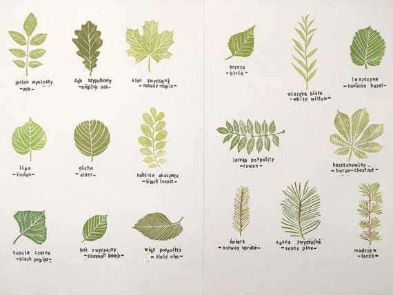 Common tree leaves stamp set of 17 specimens hand carved ...