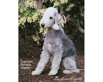 Bedlington Terrier Flag, Bedlington Terrier Gift, Bedlington Terrier Art, Bedlington Terrier