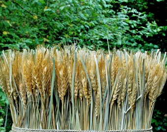 """Natural Preserved Wheat Bundle 10""""x 15"""""""
