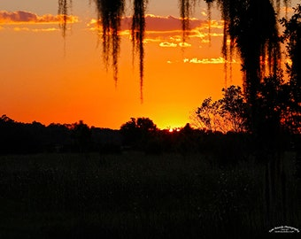 Southern Sunset through Spanish Moss