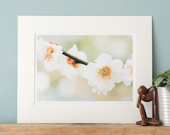 Cherry Blossom - Fine Art Photography Print with Mount to fit a ready-made 24x30/30x40/40x50cm frame