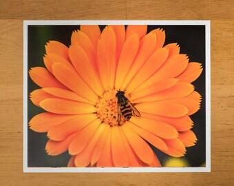 Photo Print of Bee Mimic on Orange Calendula Flower from DebSladekPhotography