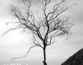 Single Black and White Tree.