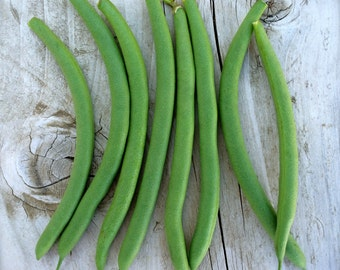 Provider Green Bean Heirloom Seeds American Standard Grown To Organic Standards