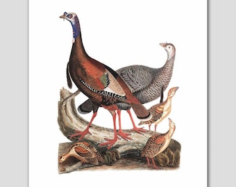 "Turkey Art, Bird Print (Woodland Folk Art, Natural History Decor) -- ""Wild Turkeys"" 19th Century"