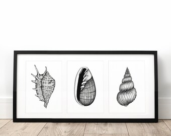 Cabinet of seashell - limited edition screen print