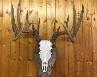 Deer-Skull-European-Mount-REPLICA-High-Quality-Taxidermy  ,Faux ,Log Cabin Decor,Art