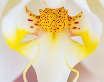 White and Yellow Orchid, Macro Color Photography