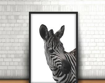 White Zebra Downloadable Print