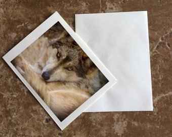 Mexican Gray Wolf Blank Notecard