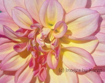 Pink Flower Photography,  Pink Dahlia Photography - Fine Art Photography