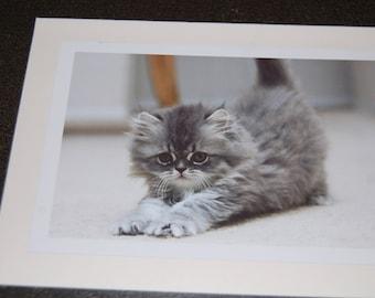 Gray Persian Kitten Stretching-Photo Print 5x7 Notecard and Envelope