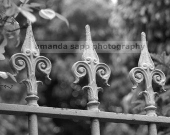 Paris fleur de lis fence black and white photograph