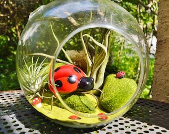 Ladybug Terrarium ~  Mother Ladybug with babies ~ 2 Air plants ~ Hanging Glass Round  Globe ~ Miniature Garden ~ Gift Idea ~ Mothers Day