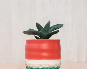 Carved Planter in Coral