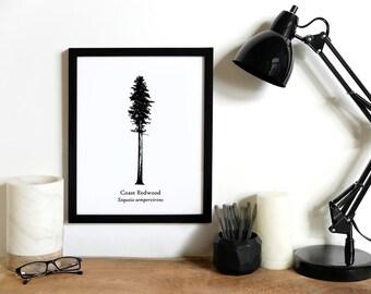 Coast Redwood Tree Illustration   Rustic Wall Decor   Tall Tree Print