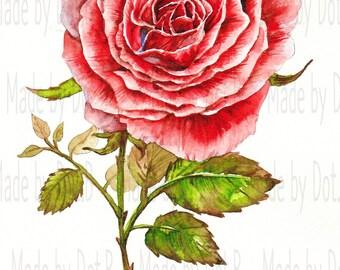 Bloom Rose