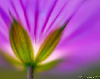 Flower Photography, Lavender Blue Geranium, Fine Art Print, Photo Greeting Card, Dreamy Modern, Macro Abstract, Feminine, Gift for Her