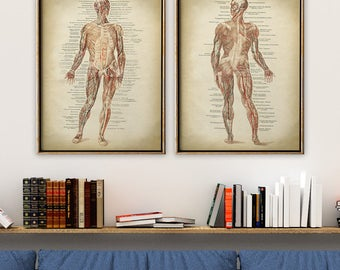 Anatomy Poster SET of 2, Anatomical Print, Human Body Chart, Anatomy Chart, Medical Print, Anatomy Chart, Antique Anatomy, Muscles Print
